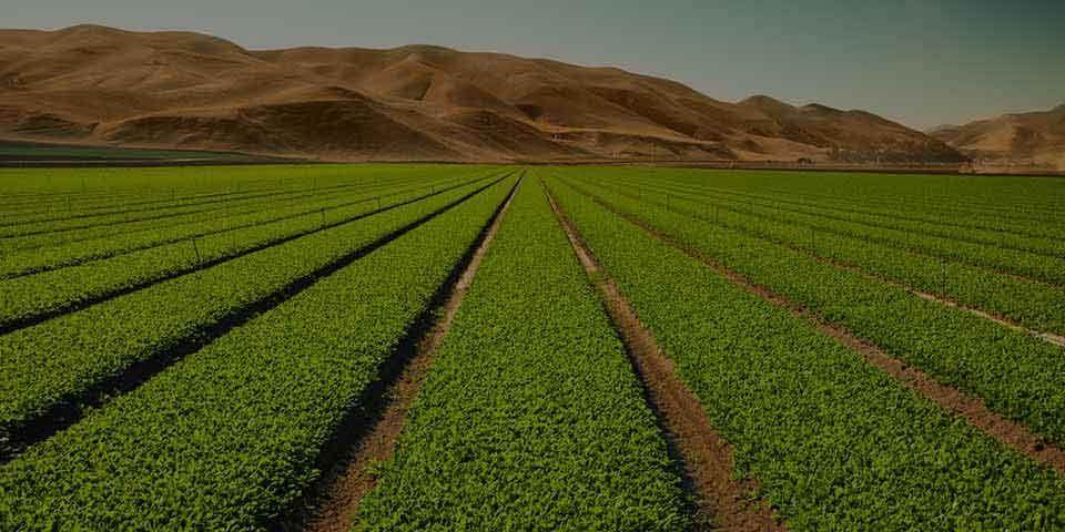 Les Mills Nutrition Crop Fields