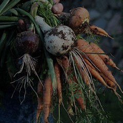 root-vegetables-thumbnail