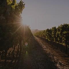 Organic-Farms-240x240.jpg